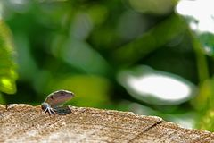 Jaszczurki obwieszenie na fiszorku zdjęcie stock