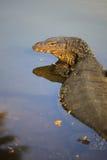 jaszczurki parka woda Fotografia Royalty Free