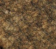 Jaszczurki skóra Fotografia Stock
