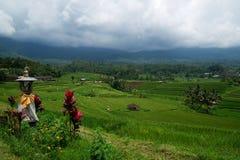 Jatileuwih green terraced rice fields panorama view underneath cloudy sky in Bali. Stock Image
