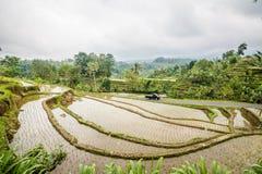 Jatiluwih在巴厘岛,印度尼西亚的米领域 免版税库存照片
