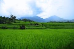 Jatiluwih的壮观的露台的米领域 免版税图库摄影