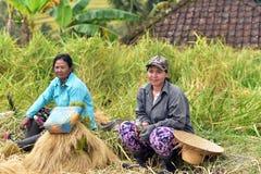 Jatiluwih米领域的,巴厘岛,印度尼西亚农夫 库存图片