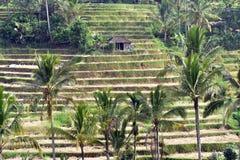 Jatiluwih米领域,巴厘岛,印度尼西亚 免版税库存照片