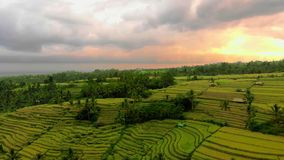 Jatiluwih绿色土地村庄空中射击  在巴厘岛的惊人的米大阳台 寄生虫前进 股票录像