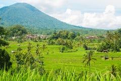 Jatiluwih, красивое поле риса стоковое изображение rf