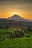 Jatiluwih Rice Agung i tarasów wulkan przy wschodem słońca Zdjęcie Royalty Free