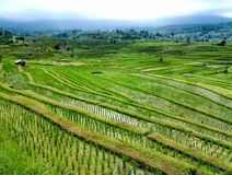 Jatiluwih rice fields Royalty Free Stock Images