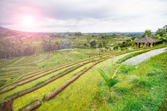 Jatiluwih rice fields Royalty Free Stock Photos