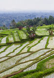 Jatiluwih rice fields Stock Photo