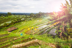Jatiluwih rice fields Stock Photos