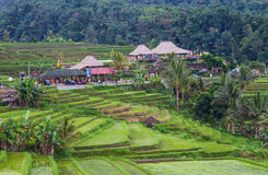 Jatiluwih rice fields Stock Photography