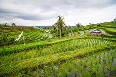 Jatiluwih rice fields Stock Photography