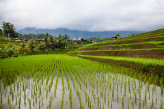 Jatiluwih rice fields Stock Images