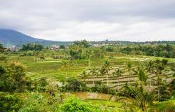 Jatiluwih rice fields Stock Image