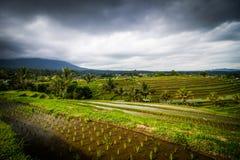 Jatiluwih rice fields Stock Images