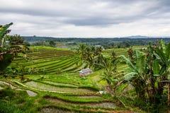 Jatiluwih rice fields Royalty Free Stock Photos