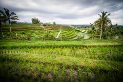 Jatiluwih rice fields Royalty Free Stock Photography