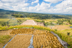 Jatiluwih rice terrace Royalty Free Stock Photos