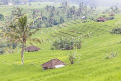 Jatiluwih rice terrace Stock Photo