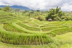 Jatiluwih rice terrace Royalty Free Stock Photos