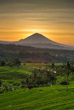 Jatiluwih Rice Terraces and Agung volcano at sunrise Royalty Free Stock Photo