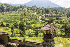 Jatiluwih rice terraces in Bali, Indonesia Stock Image