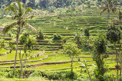 Jatiluwih rice terraces in Bali, Indonesia Royalty Free Stock Photography