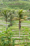 Jatiluwih rice terraces in Bali Stock Image