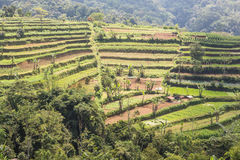 Jatiluwih rice terraces in Bali Stock Photos