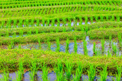Jatiluwih rice terraces, Bali, Indonesia Stock Photography