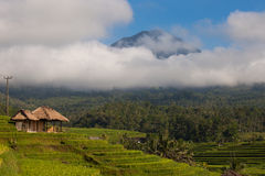 Jatiluwih Rice terraces in Bali Royalty Free Stock Image