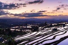 Jatiluwih Rice Terraces Royalty Free Stock Image