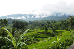 Jatiluwih rice terraces Royalty Free Stock Image