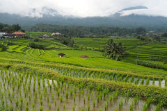 Jatiluwih rice terraces Stock Photo