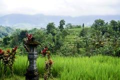 Jatiluwih risterrass i Bali Arkivbild