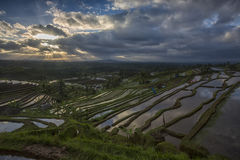 Jatiluwih sunrise Stock Photography