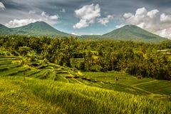 Jatiluwihpadieveld in Bali stock afbeelding
