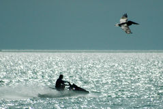 Jato-esqui e pelicano Fotografia de Stock Royalty Free