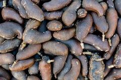 Jatoba faz o cerrado - árvore indiana ocidental do sement do fruto dos locustídeo vista da parte superior - configuração do plano fotografia de stock