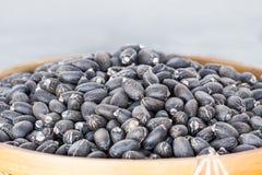 Free Jatropha Curcas Seeds Royalty Free Stock Photography - 36745287
