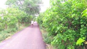 Jatropha plantation at roadside