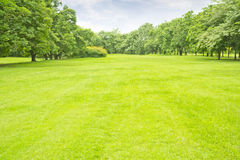 Jatujak. Green grass on a golf field Royalty Free Stock Photo
