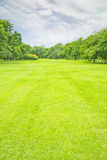 Jatujak. Green lawn in city park Stock Images