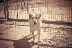 Jaula abandonada del perro Fotos de archivo