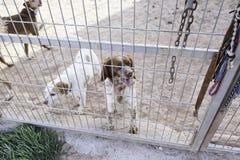 Jaula bloqueada del perro Imagen de archivo