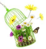 Jaula con la hierba, las flores y los insectos Imágenes de archivo libres de regalías