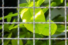 Jaula con las hojas Imagen de archivo