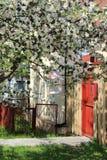 Jaula con un pájaro en una manzana floreciente fotografía de archivo libre de regalías