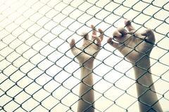 Jaula de cogida de la malla de la mano El preso quiere la libertad foto de archivo libre de regalías